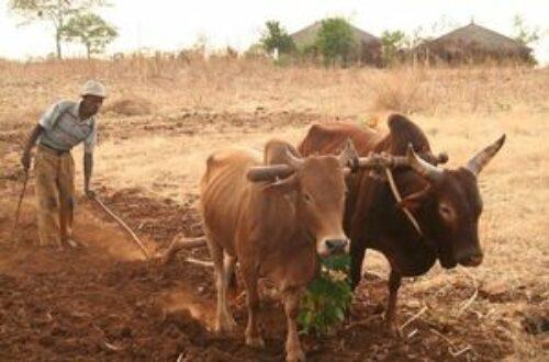 Article : L'Agroécologie, stratégie d'adaptation au changement climatique